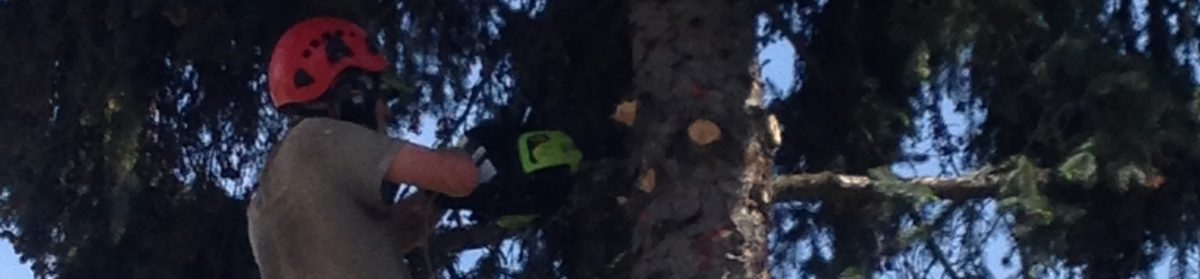Pine Marten Tree Care