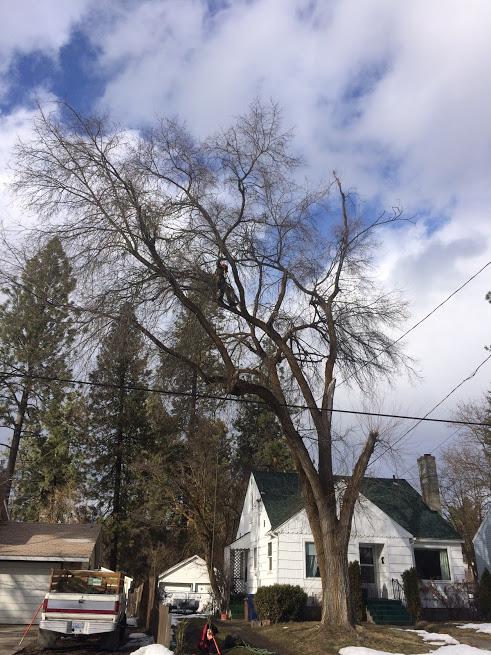 Pine Marten Tree Care Pruning in Winter